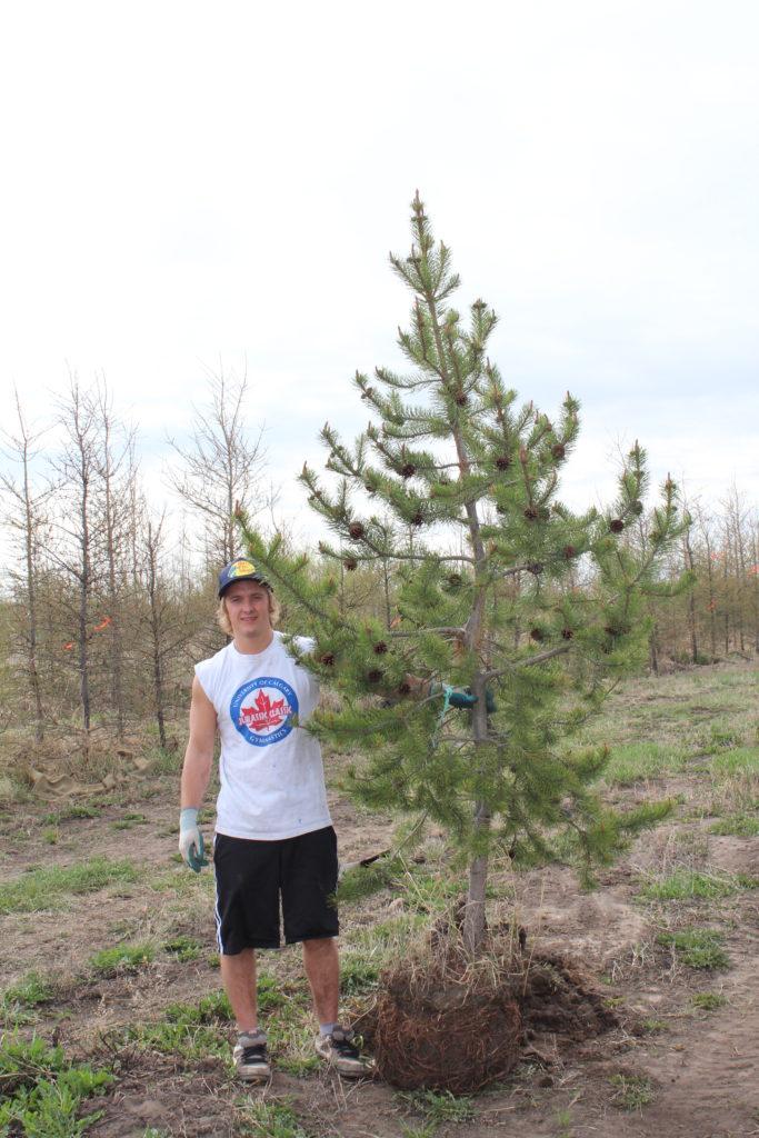 Joel holding pine